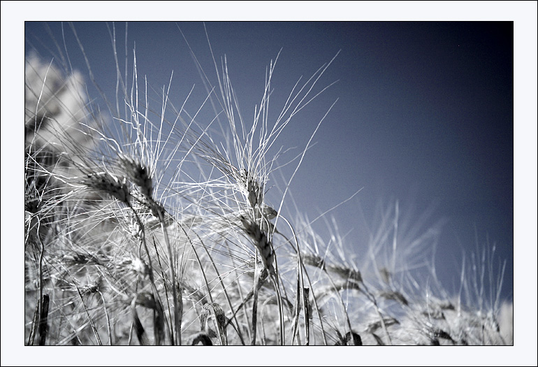 http://dune2003.free.fr/D70/DSC_3392_700.JPG